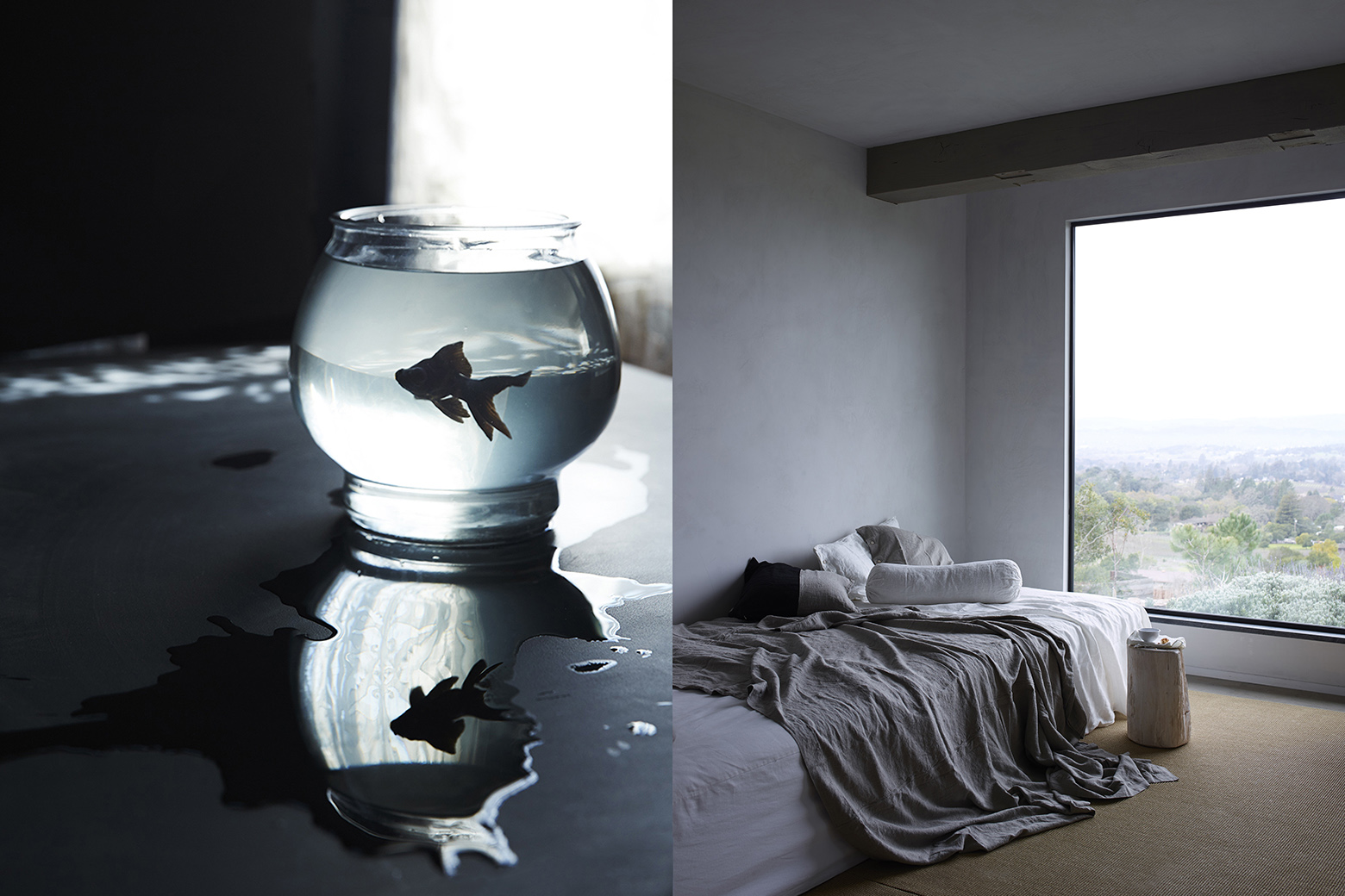 Spaces: Fish and Bed